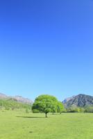 新緑の樹と草原に八ヶ岳