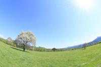 ヤマナシの木と草原に太陽光