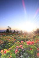 鉢伏山 レンゲツツジと朝日