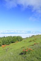 美ヶ原高原 レンゲツツジと北アルプスに雲海
