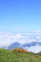 美ヶ原高原 レンゲツツジと雲海