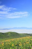 霧ヶ峰高原 キスゲの花と中央アルプスに雲海