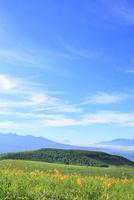 霧ヶ峰高原 キスゲの花と富士山