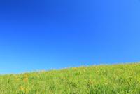 キスゲの花と青空