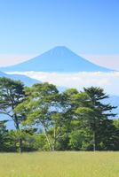 富士山と緑樹に雲海