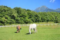 清里高原 馬と牧場
