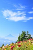 ユリの花と富士山