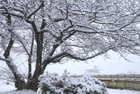 雪降る平城京跡