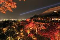 紅葉の清水寺ライトアップ