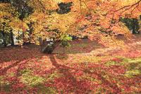 紅葉の嵯峨野
