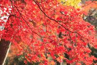 紅葉の嵐山公園
