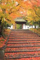 紅葉の安楽寺