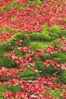 苔と紅葉落葉