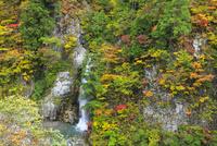 白山スーパー林道 紅葉の岩底の滝