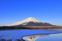 山中湖の雪景色に白鳥と富士山