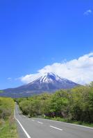 新緑の朝霧高原より道と富士山