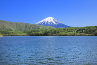 新緑の西湖より富士山