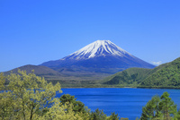 新緑の本栖湖より富士山 11076013646| 写真素材・ストックフォト・画像・イラスト素材|アマナイメージズ