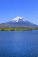新緑の本栖湖より富士山