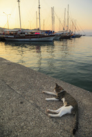 フェティエ港の夕景 野良猫