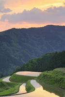 西ヶ岡の棚田の夕照
