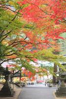 四国霊場88番札所 大窪寺の紅葉