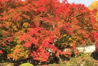 四国霊場88番札所 大窪寺の紅葉 11076014559| 写真素材・ストックフォト・画像・イラスト素材|アマナイメージズ