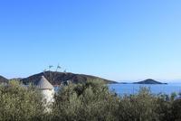 小豆島オリーブ公園 オリーブとギリシャ風車 11076014570| 写真素材・ストックフォト・画像・イラスト素材|アマナイメージズ