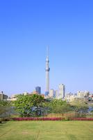 東京スカイツリーと新緑にツツジ