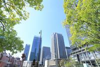 東京駅と丸の内ビル群に新緑