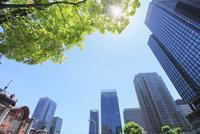 東京駅と丸の内ビル群に新緑 11076014815| 写真素材・ストックフォト・画像・イラスト素材|アマナイメージズ