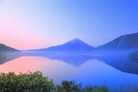 新緑の富士山と本栖湖に朝霧 11076014974| 写真素材・ストックフォト・画像・イラスト素材|アマナイメージズ