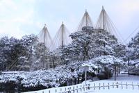 雪の兼六園 唐崎松の雪吊り 11076015054  写真素材・ストックフォト・画像・イラスト素材 アマナイメージズ