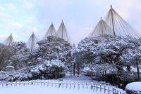 雪の兼六園 唐崎松の雪吊り 11076015055  写真素材・ストックフォト・画像・イラスト素材 アマナイメージズ