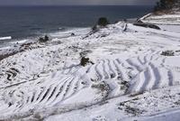 雪の白米千枚田 11076015061| 写真素材・ストックフォト・画像・イラスト素材|アマナイメージズ