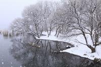 雪降る琵琶湖畔 11076015108| 写真素材・ストックフォト・画像・イラスト素材|アマナイメージズ