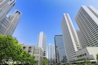 新宿副都心のビル群と新緑 11076015267| 写真素材・ストックフォト・画像・イラスト素材|アマナイメージズ