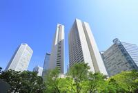 新宿副都心のビル群と新緑