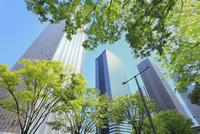 新宿副都心のビル群と新緑 11076015281| 写真素材・ストックフォト・画像・イラスト素材|アマナイメージズ