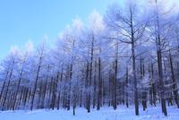 霧氷と青空 11076015310| 写真素材・ストックフォト・画像・イラスト素材|アマナイメージズ