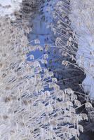 姫川の霧氷
