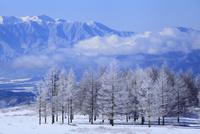 霧ヶ峰高原の霧氷
