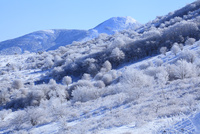 霧ヶ峰高原の霧氷 11076015332| 写真素材・ストックフォト・画像・イラスト素材|アマナイメージズ