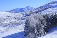霧ヶ峰高原の霧氷 11076015333| 写真素材・ストックフォト・画像・イラスト素材|アマナイメージズ