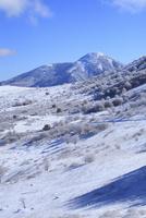 霧ヶ峰高原の霧氷 11076015334| 写真素材・ストックフォト・画像・イラスト素材|アマナイメージズ