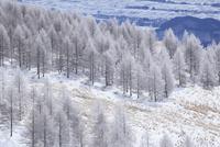霧ヶ峰高原の霧氷 11076015339| 写真素材・ストックフォト・画像・イラスト素材|アマナイメージズ
