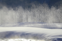 松川の霧氷