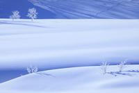雪原と霧氷
