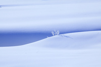 雪原と霧氷 11076015353| 写真素材・ストックフォト・画像・イラスト素材|アマナイメージズ