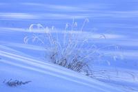雪原と霧氷 11076015389| 写真素材・ストックフォト・画像・イラスト素材|アマナイメージズ